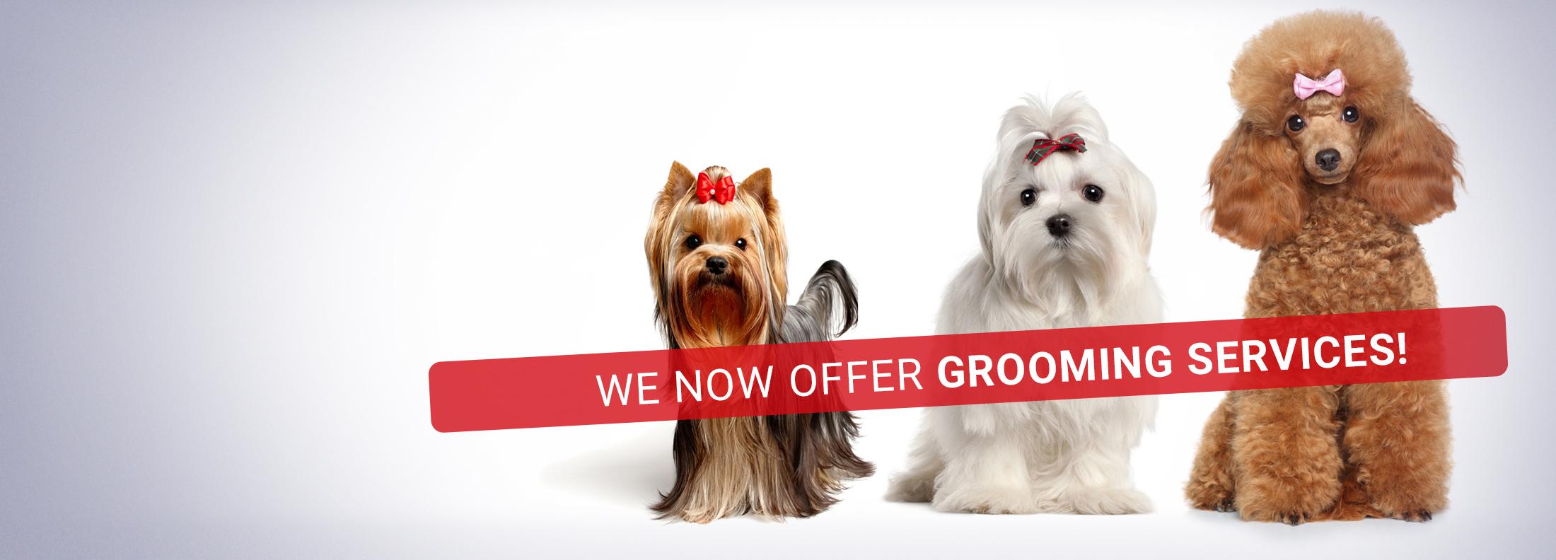 slider-grooming-1